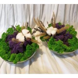 set boluri licheni